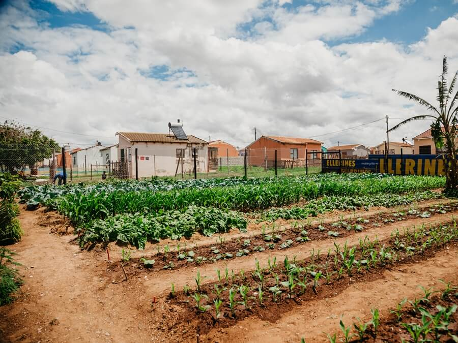 Community vegetable garden at Joe Slovo