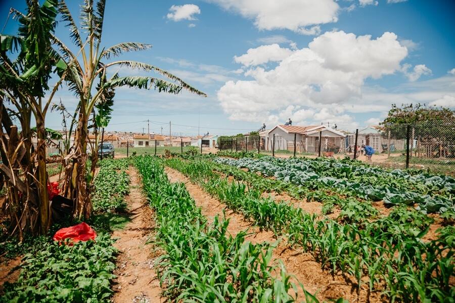 Community vegetable project in Joe Slovo