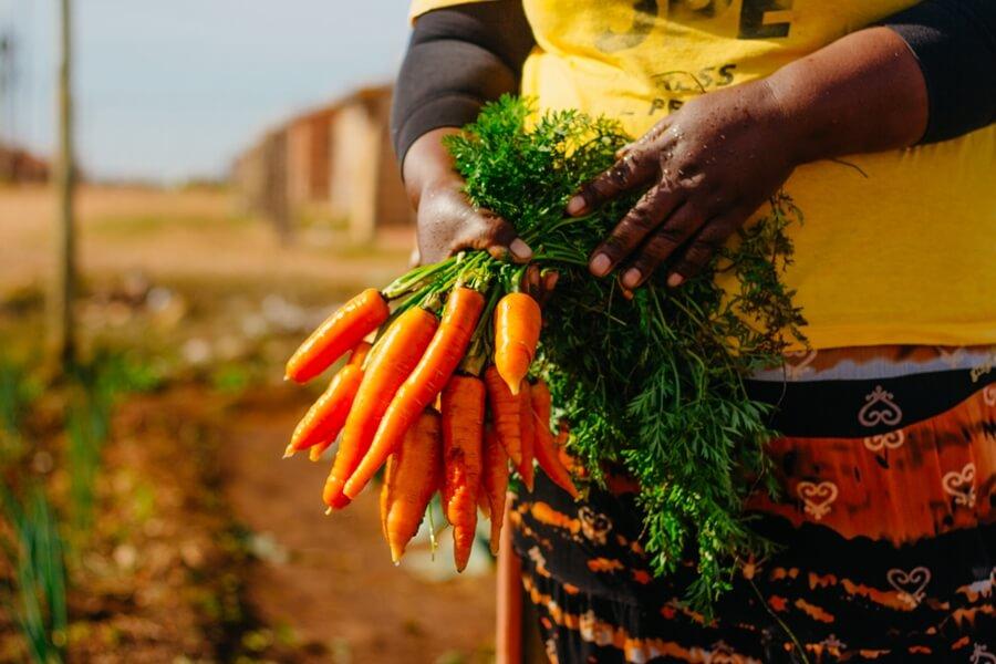 Lady holding carrots at community vegetable garden Joe Slovo