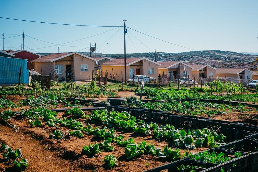 Local backyard vegetable garden in Joe Slovo