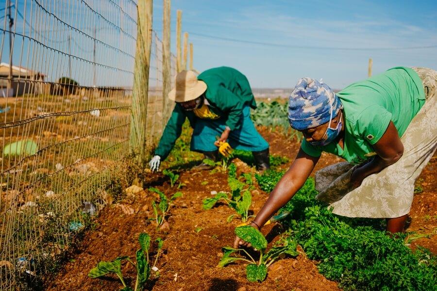 Women growing vegetables in Joe slovo Township
